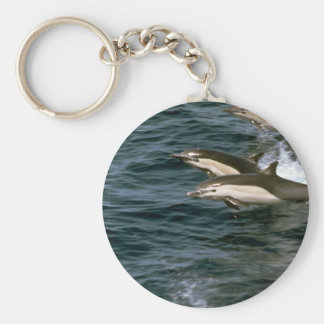 Common dolphin key chain
