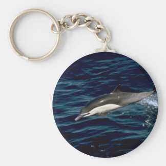 Common dolphin key chains