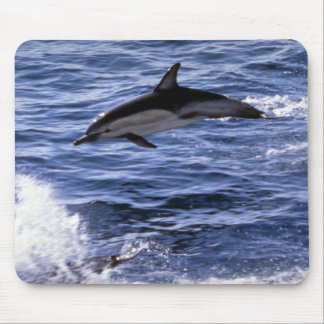 Common dolphin mousepad