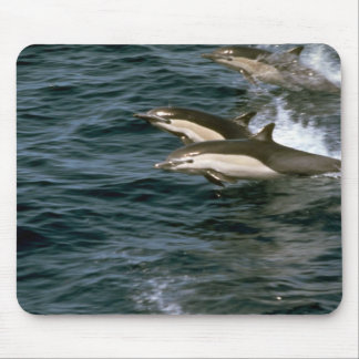 Common dolphin mouse pads