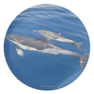 Common Dolphin Plate