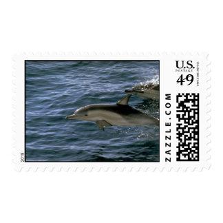 Common dolphin postage