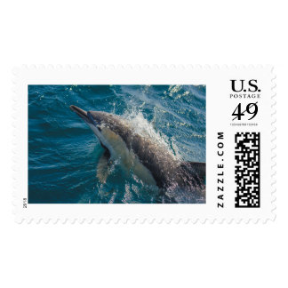 Common Dolphin postage stamp -- various sizes