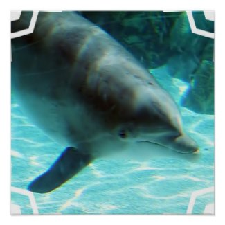 Common Dolphin Poster Print