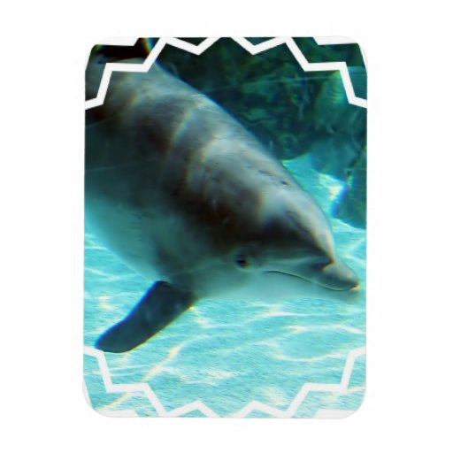 Common Dolphin Premium Magnet Vinyl Magnets