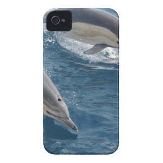 common-dolphins-914 Case-Mate iPhone 4 case