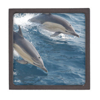 common-dolphins-914 gift box