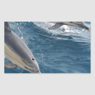 common-dolphins-914 rectangular sticker