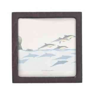 Common Dolphins Jewelry Box