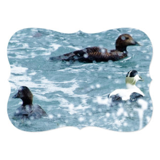 Common Eider Are Waiting Out A Rain Shower Cards