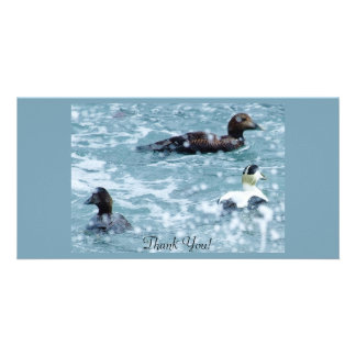 Common Eider Are Waiting Out A Rain Shower Custom Photo Card