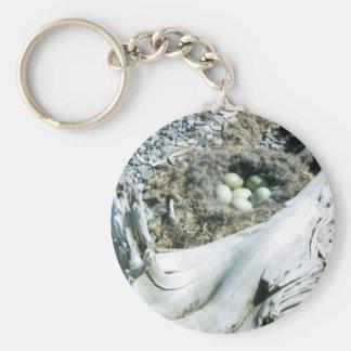 Common Eider Nest Key Chain