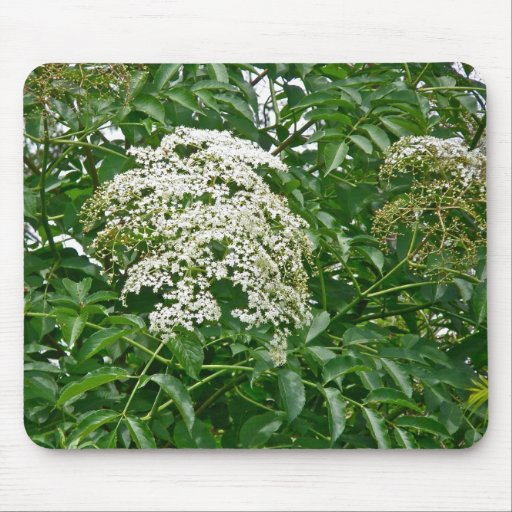 Common Elderberry Coordinating Items Mouse Pad
