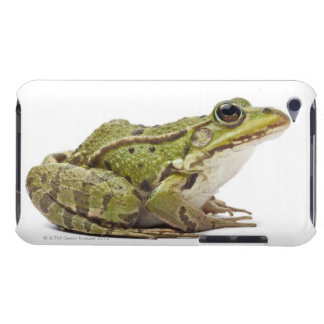Common European frog or Edible Frog iPod Touch Cover