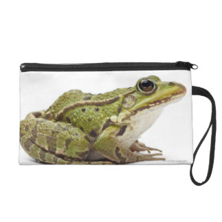 Common European frog or Edible Frog Wristlet Purse
