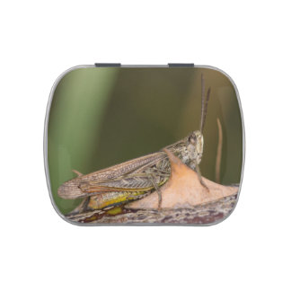 Common Field Grasshopper Jelly Belly Tin