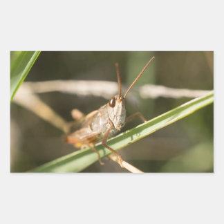 Common Field Grasshopper Rectangular Sticker