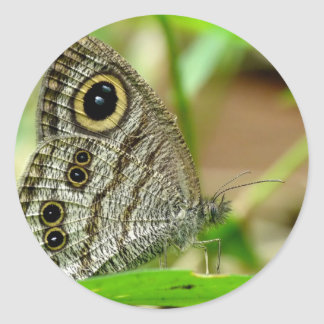 Common Fivering Satyrinae Butterfly Classic Round Sticker