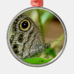 Common Fivering Satyrinae Butterfly Christmas Ornaments