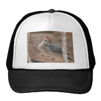 common flicker on nest 2 trucker hat
