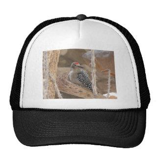 common flicker on nest trucker hat