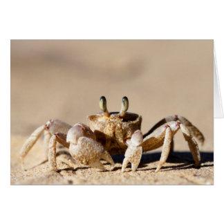 Common Ghost Crab (Ocypode Cordimana) Cards