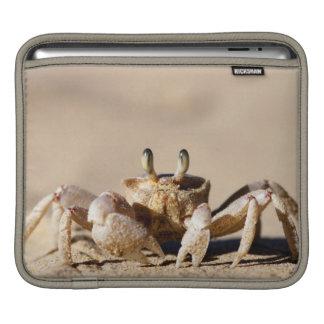 Common Ghost Crab (Ocypode Cordimana) iPad Sleeve