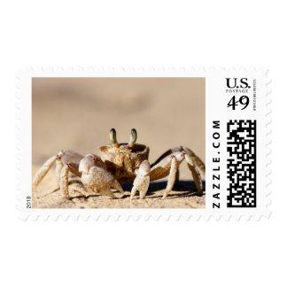 Common Ghost Crab (Ocypode Cordimana) Postage