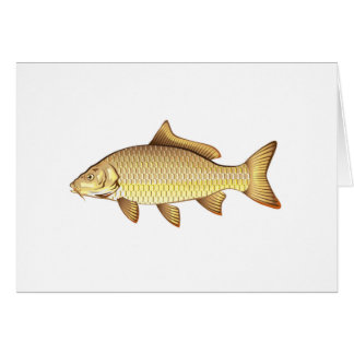 Common Golden Carp Vector Art Card