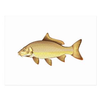 Common Golden Carp Vector Art Postcard
