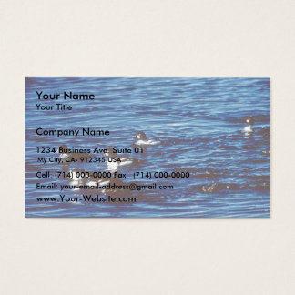 Common Goldeneye Business Card