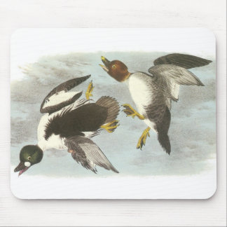 Common Goldeneye by Audubon Mouse Pad