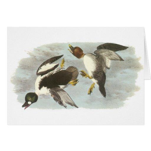 Common Goldeneye, John Audubon Card