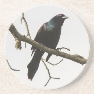 Common Grackle Drink Coasters