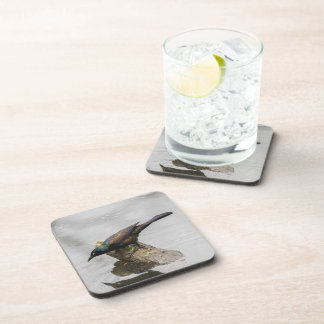 Common Grackle Beverage Coaster