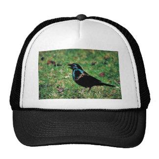 Common grackle trucker hat