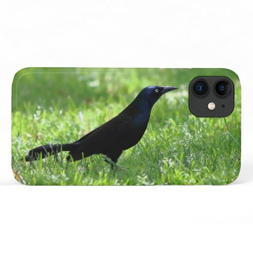 Common Grackle, iPhone Case. iPhone 11 Case