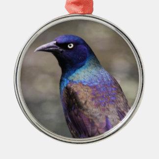 Common Grackle Metal Ornament