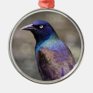 Common Grackle Christmas Ornaments
