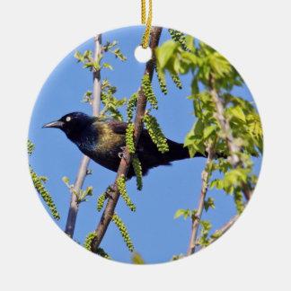 Common Grackle Ornament