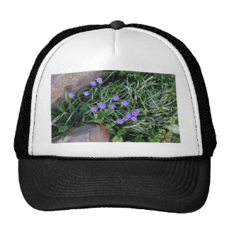 common grape hyacinth,  blue purple flower,floral trucker hat
