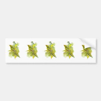 Common Green Magpie Bumper Sticker