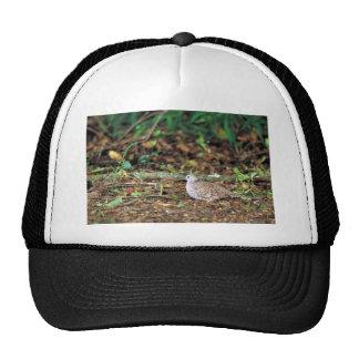Common ground dove trucker hat