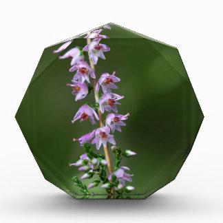 Common Heather (Calluna vulgaris) Acrylic Award