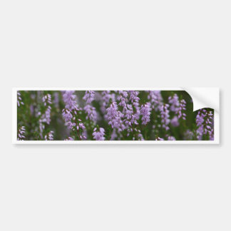 Common Heather (Calluna vulgaris) Bumper Sticker