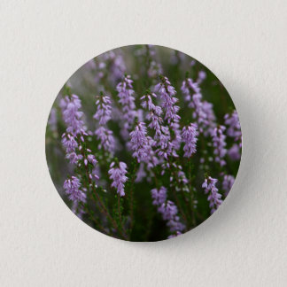 Common Heather (Calluna vulgaris) Button