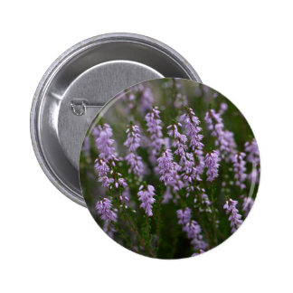 Common Heather (Calluna vulgaris) Button