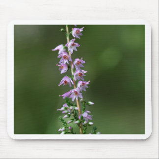 Common Heather (Calluna vulgaris) Mouse Pad