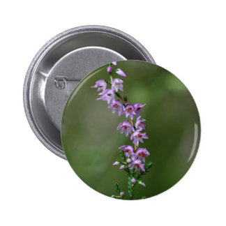 Common Heather (Calluna vulgaris) Pinback Button