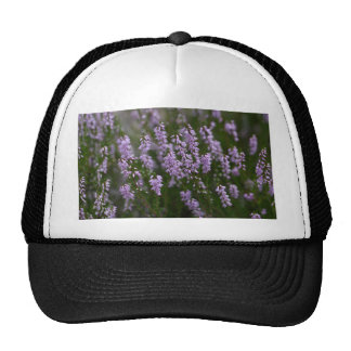 Common Heather (Calluna vulgaris) Trucker Hat